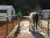 Pferde-Dusche